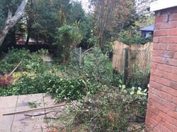 Laurel and berberis hedges cut down