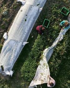 Green Wagon Farm: Monthly documentation