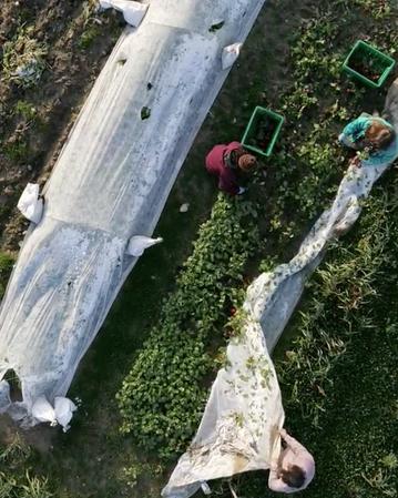 Green Wagon Farm: Documentation