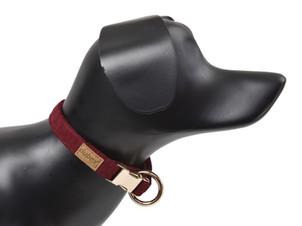 G Dog Series collar