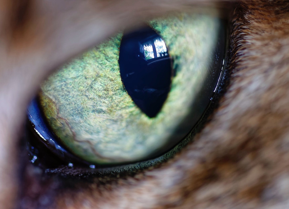 animal ophthalmology