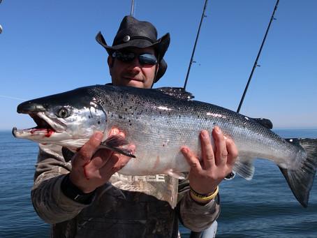 Nice Atlantic Salmon!
