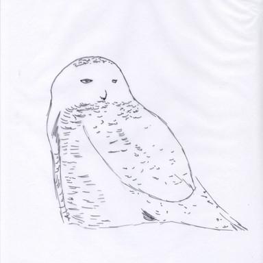 Owl Scan