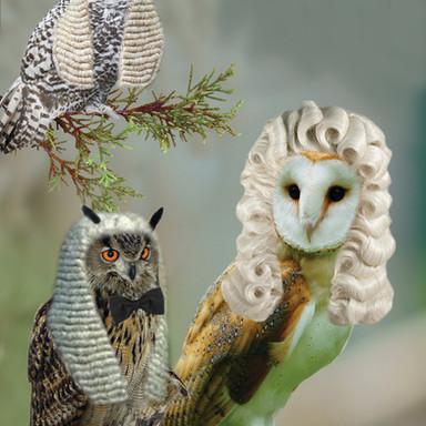 Parliament Owls