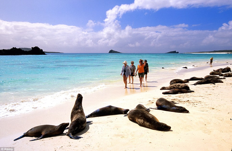 Sea lions on the beach of Galapagos