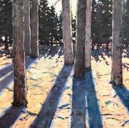 'Forest Floor'