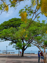 Zanzibar 50th Bday Jana-2684.jpg