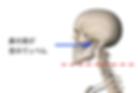 脊椎 肋骨&骨盤右のみ.png