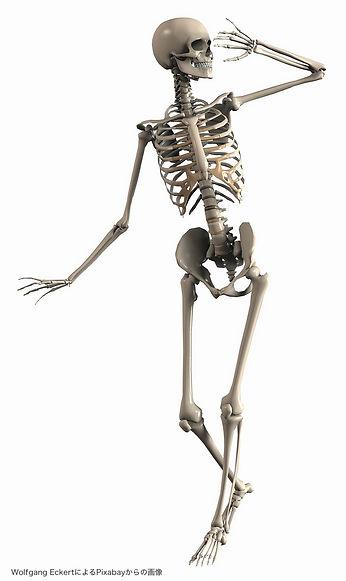 skeleton-2504343_1280.jpg