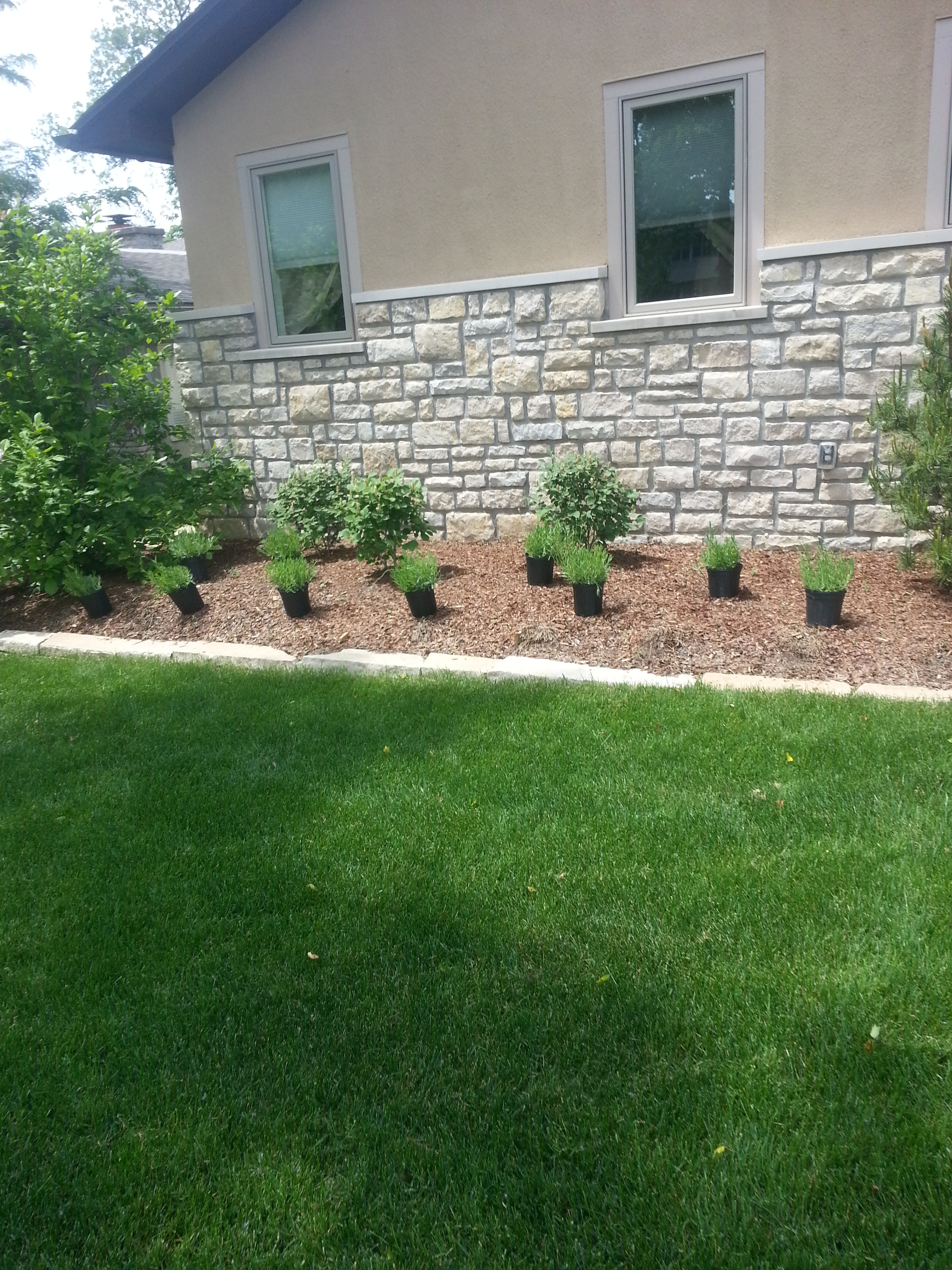landscaping plants upper arlington