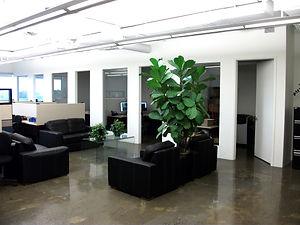Commercial renovation, office renos