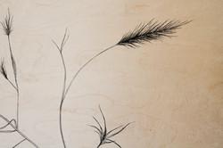 foxtail detail