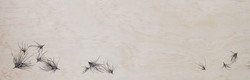 medusahead tumbleweed