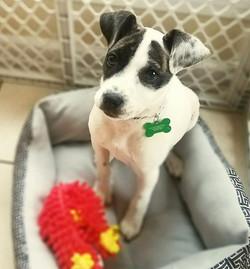 Port City Puppy