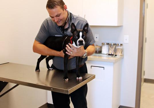 Small Dog Exam