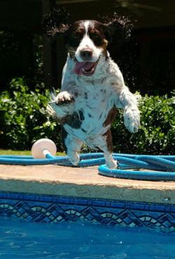 Port City Swimming Dog