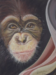 Affen Männchen_36