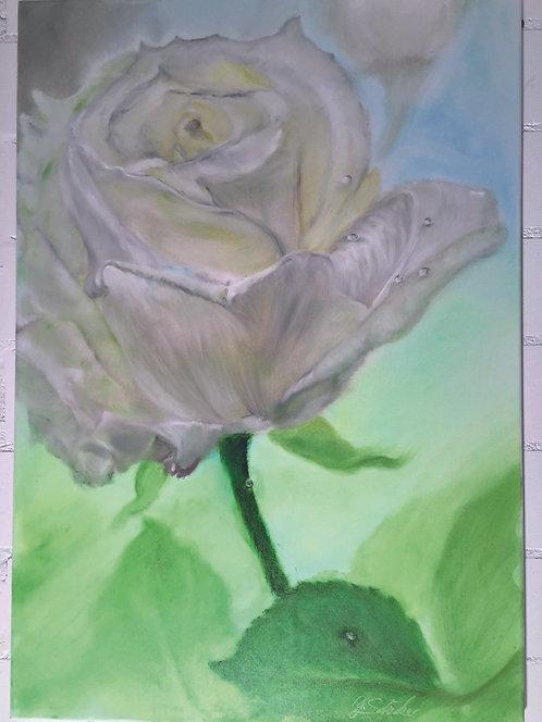 White Rose_155