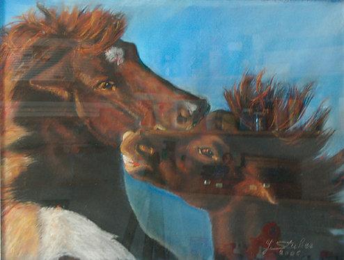 Islandpferde-Mutterliebe_38