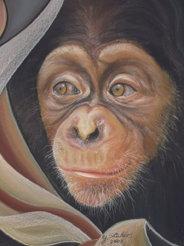 Affen Weibchen_35