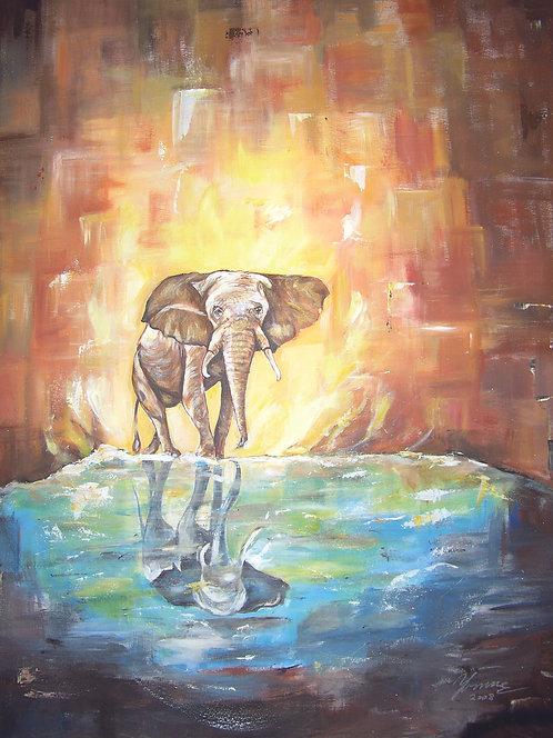 Elefant_101