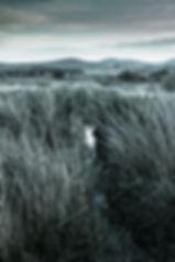 Snowdonia.06-18 copy.jpg