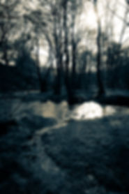 trees.wales.02.print.jpg