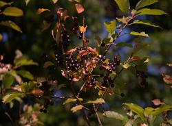 Domaine du Bocage|Fruits sauvages|Ép