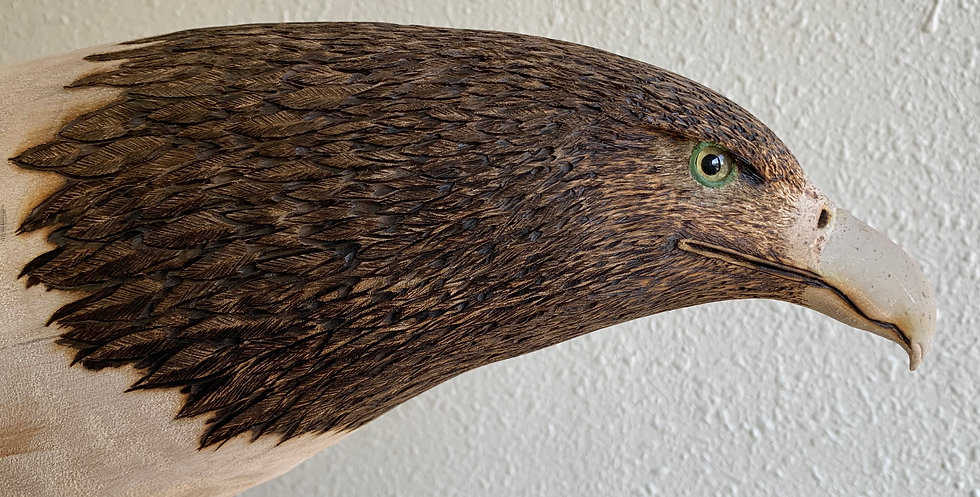 Eagle Head detailed.JPG