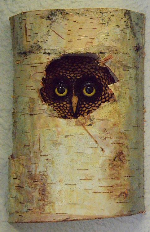 Peek a Hoo Owl