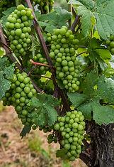 Wijn-1.jpg