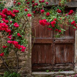 Roses, Piedmont, Italy