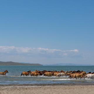 Mongolia-6.jpg