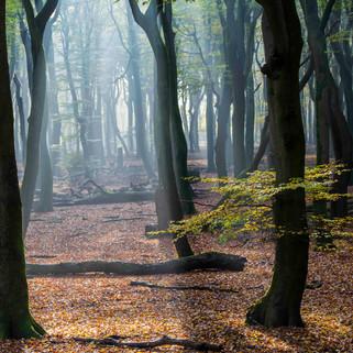 Speulder en Sprielder Wood, Veluwe, The Netherlands