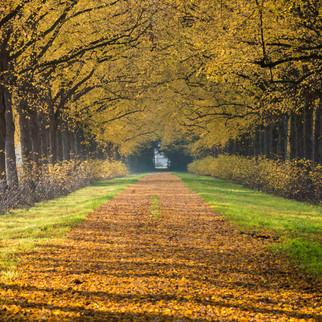 Fall, Beverweerd, The Netherlands