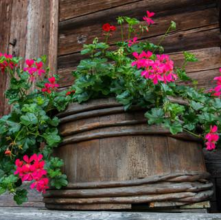 Flowerpot, Interlaken, Switzerland