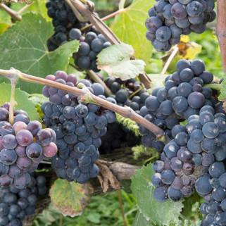 Wijn-17.jpg