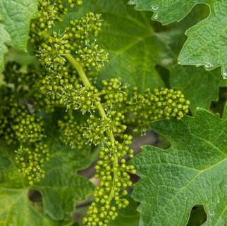 Wijn-5.jpg