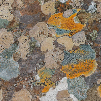 Lichens, Scotland