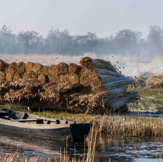 Reedbeds with Boat, Giethoorn, The Netherlands