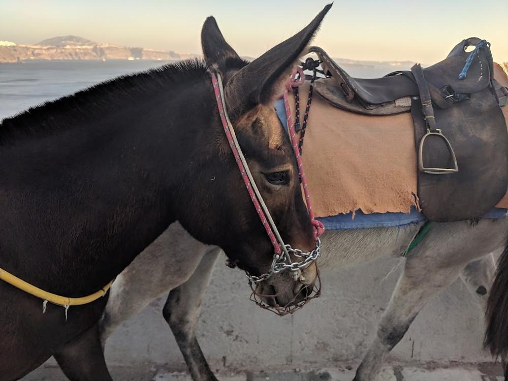 Donkey Oia with Kids