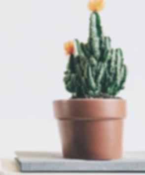 Cactus%20Plant_edited.jpg