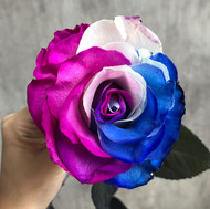 Tinted Pink/Blue/White