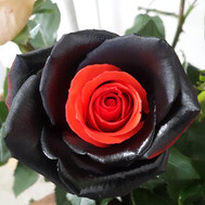 Essence Red/Black