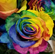 Tinted Rainbow