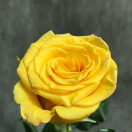 High & Yellow