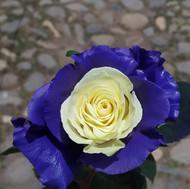Essence  Blue