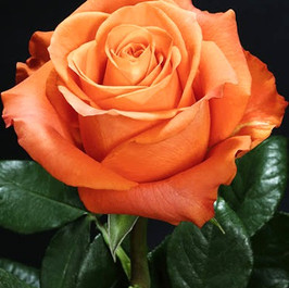 Orange **new Size: 5-5.5cm Length: 40-60cm