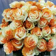 Tinted Orange/White