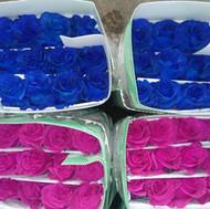 Tinted Blue & Pink